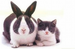 Rabbit & Cat.jpg