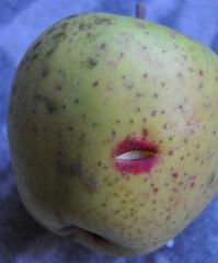 atout fruit,GAEC Ambroisie