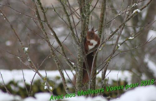 Voeux Squirrel.jpg