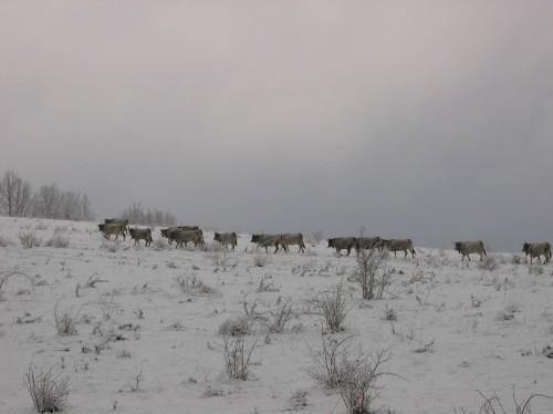 Neige sur le lac de Montbel 005.jpg