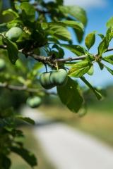 atout fruit,voie verte canal du midi à montségur