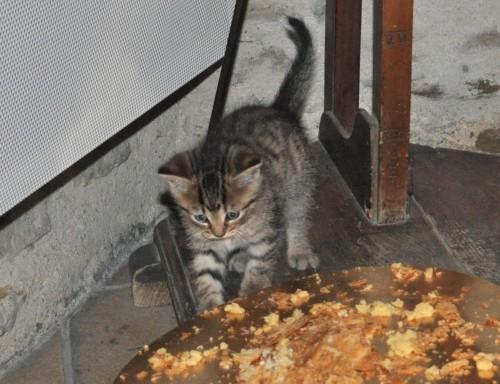 Petit chat galette.jpg