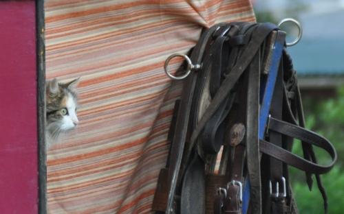 el gato nomada
