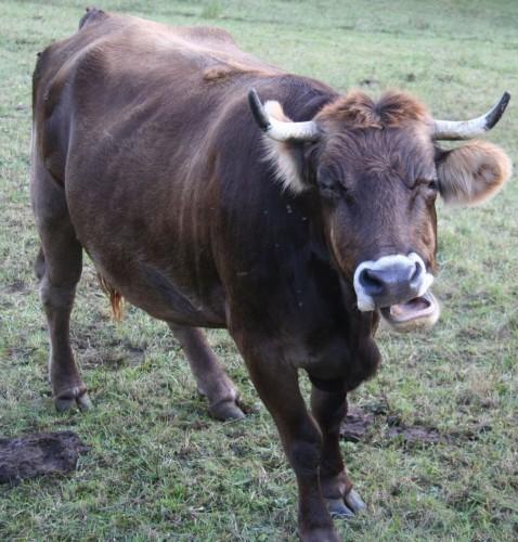 La Vache qui Rit.jpg