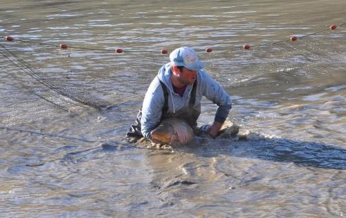 aappma du quercorb,fédération de pêche de l'aude