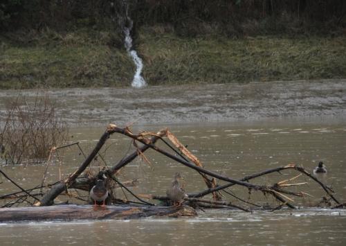 2020 Inondations 23 janvier 008.JPG