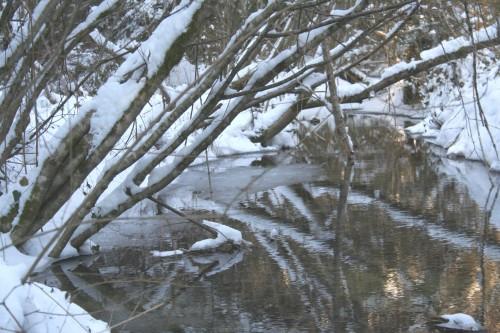 Neige 5 février 2012 015.jpg