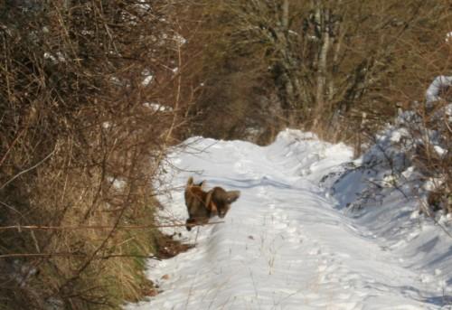 Neige 5 février 2012 010.jpg