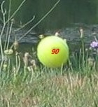 Yellow ball.jpg
