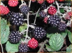 atout fruit