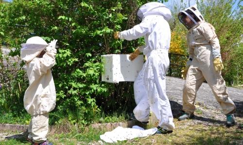 aurélien pierron,ruches