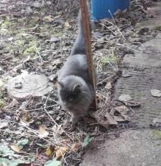 chat trouvé montjardin