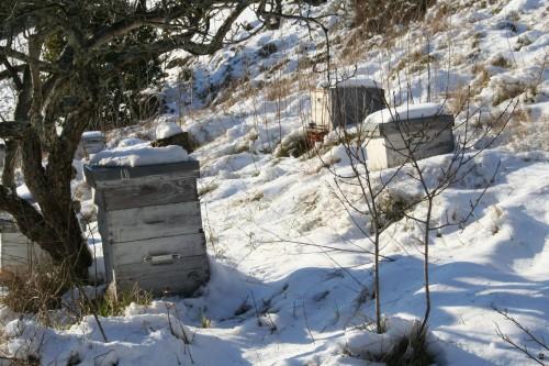 Neige 5 février 2012 022.jpg
