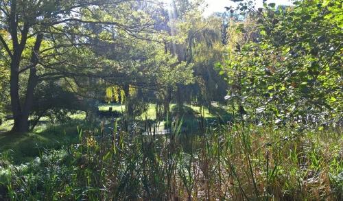 bernard cnocquart,l'automne