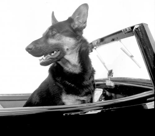 M. Paul Ehreinstein chien 001.jpg